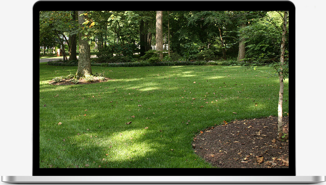 Lawn Care Cookeville Lawn Spraying Commercial Landscape Sparta Uncommon Ground